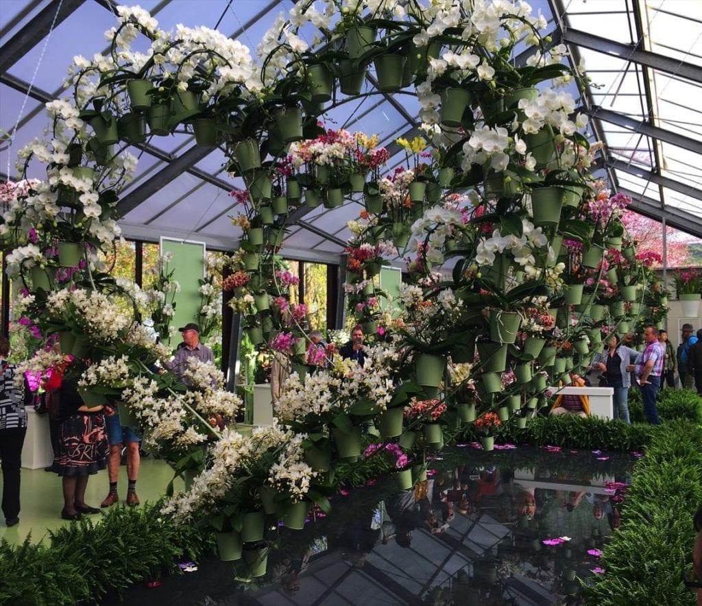 Keukenhoff gardens 2017